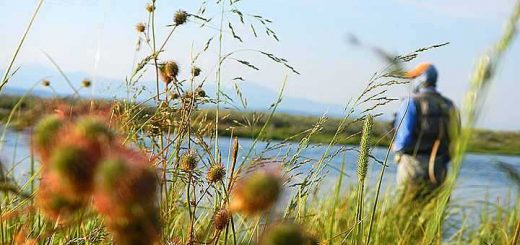 Photo des berges d'une rivière de pêche à la mouche