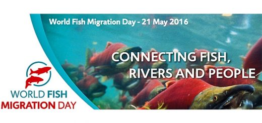 Affiche du world fish migration day