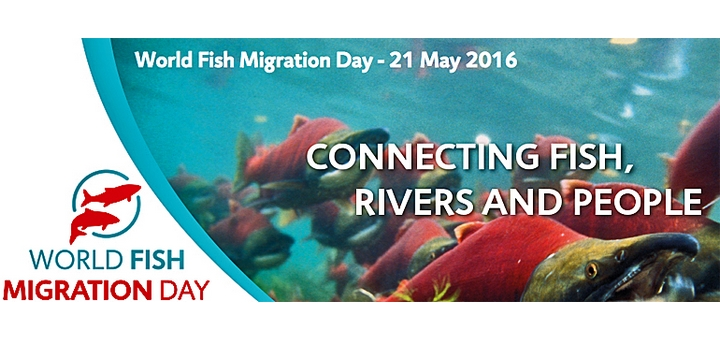 Affiche du world fish migration day