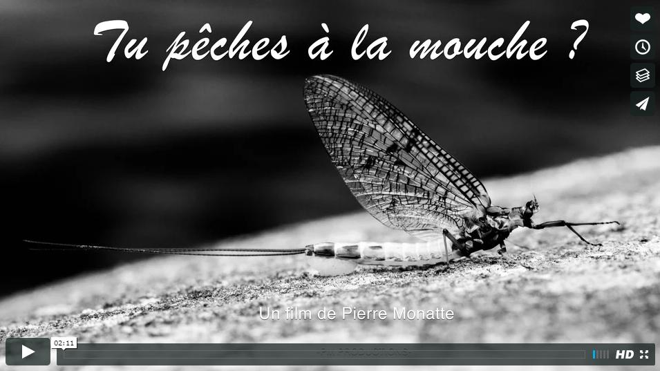 """Photo d'une éphémère mouche de mai dans le film -tu pêches à la mouche"""""""