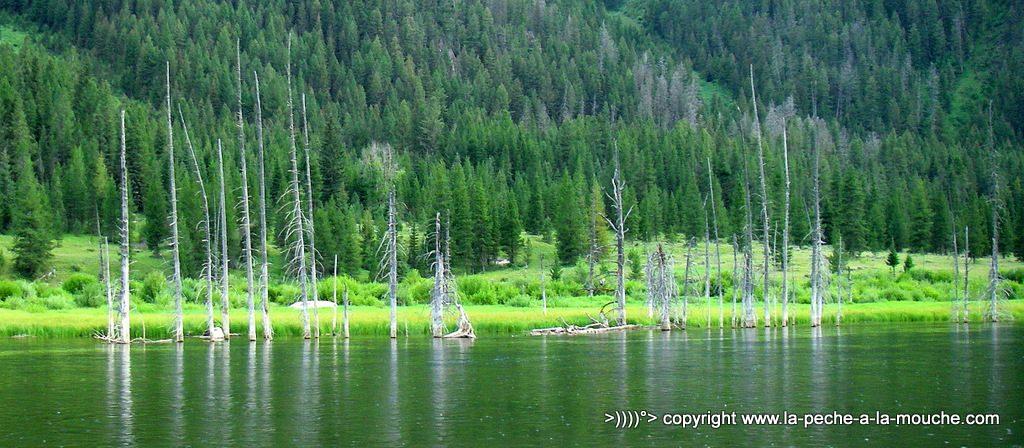 photo panorama du lac earthquake lake dans le Montana sur la Madison river.