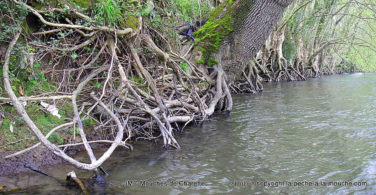 photo de berge avec beaucoup de racines sur la Nivelle au Pays Basque