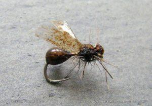 montage-mouche-fourmi-corps-maxima-002