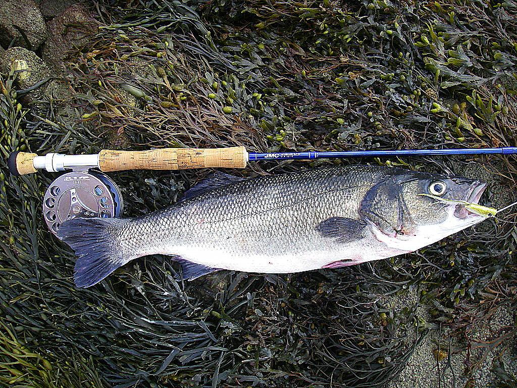 Les combinaisons les vêtements pour la pêche dété