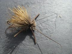 photo montage  du elk hair caddis avec rubber legs