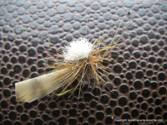 photo montage de mon cinnamon caddis ... euh ... mon sedge cannelle !