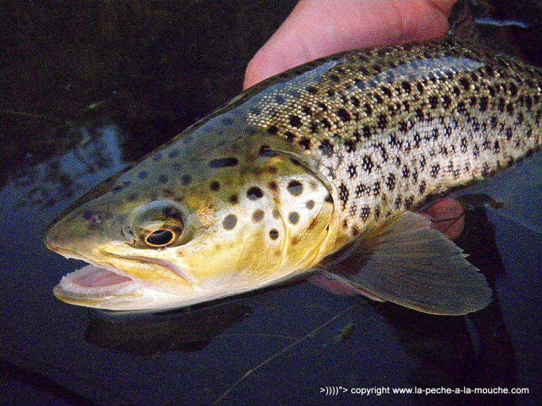 Flyfishing -Craig-Montana-Missouri-River-008.jpg