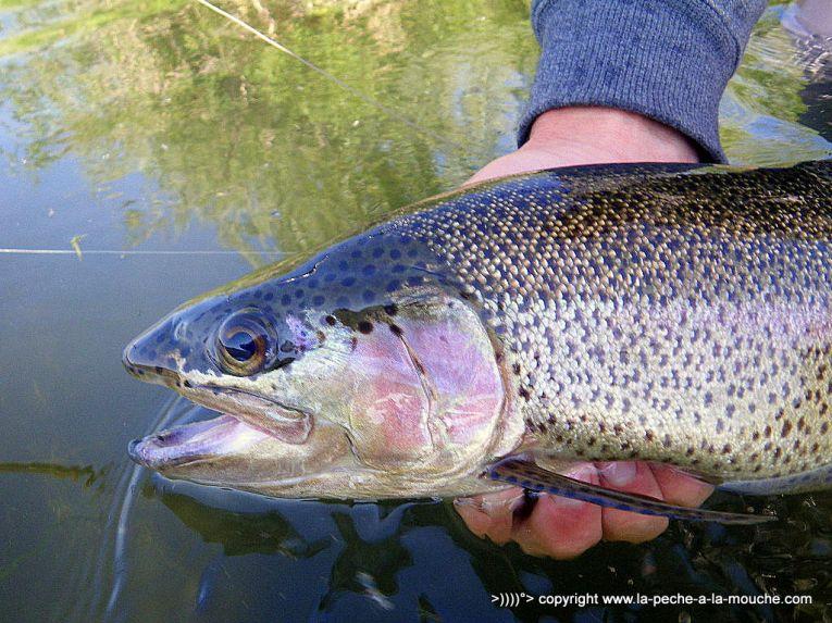 Flyfishing-craig-montana-missomiuri-river-010.jpg
