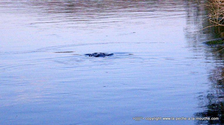 flyfishing-craig-montana-missouri-river-013.jpg