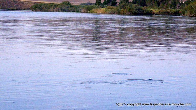 flyfishing-craig-montana-missomiuri-river-015.jpg